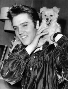1956-october-18-elvis-sweet-pea-3